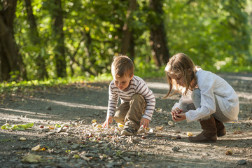 Children collecting chestnuts on forest track