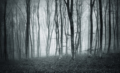 Monochrome black and white grunge textured color foggy mystic forest trees landscape.