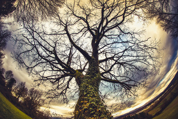 A winter tree in the Tuscan countryside seen by fisheye Wall mural