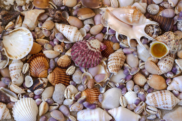 Seashells. Background.