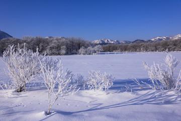 阿寒国立公園の霧氷のある風景
