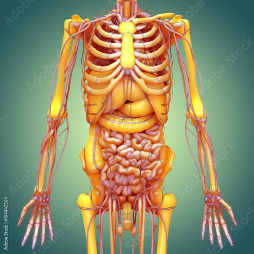 Human body anatomy brain lungs heart nervous system liver human body anatomy brain lungs heart nervous system liver stomach ccuart Choice Image