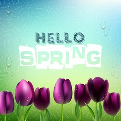 Spring background with purple Tulips flowers