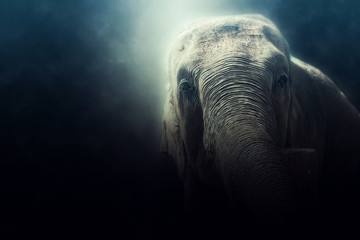 photo manipulation of a wild elephant in Sri Lanka