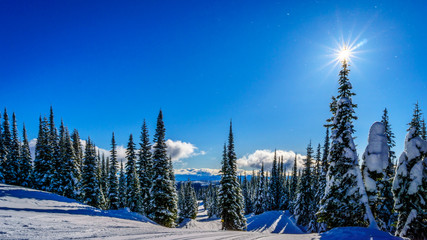 Wall Mural - Ski slopes of Mount Morrisey at the village of Sun Peaks in the Shuswap Highlands of central British Columbia, Canada with the sun topping a fir tree under a blue sky