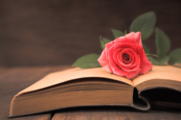 rose flower on book