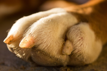 photo white dog paw closeup