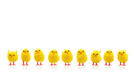 Abundance of easter chicks on a row