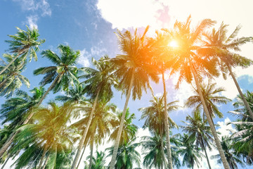 Palm trees with sun at the zenith and blue sky taken in El Nido  Palawan a Philippine attraction - Popular concept of tropical holidays -