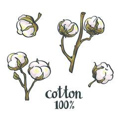 Natural Cotton. Vector set