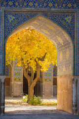Beautiful tree with yellow leaves framed in arch of Shah Mosque