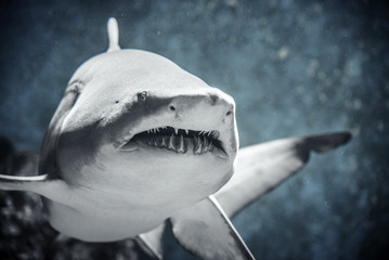 Shark floating in water.