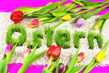 Ostern mit Gras geschrieben und Tulpen