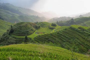 Wall Murals Vineyard Views of green Longji terraced fields and Tiantouzhai village