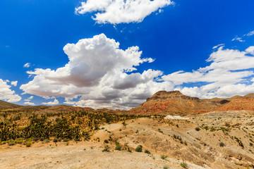 Road 1005, Littlefield, AZ 86432, USA