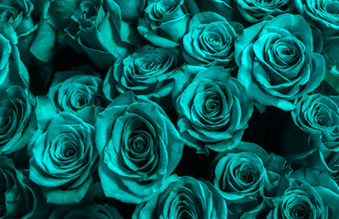 Greeting card with blue roses