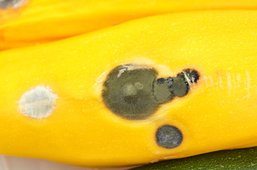 Molded vegetable marrow (zucchini)