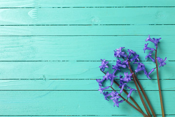 Background with blue spring flowers  on turquoise  painted woode