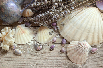 Background seashells. Vintage.