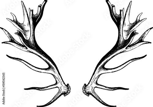 Line Drawing Deer : Free deer sketch by bronzehalo on deviantart