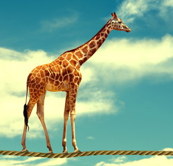 giraffe on rope