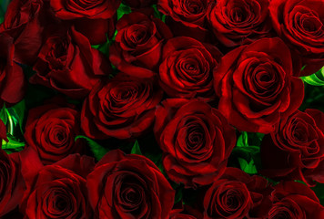 gorgeous red roses background.