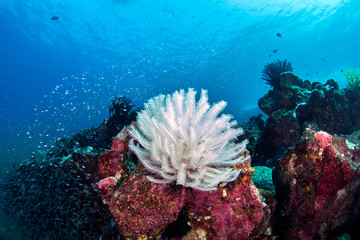 Amazing sea reef with school of tropical fishes sea lily on the rock