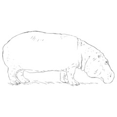 Vector Single Sketch Hippo