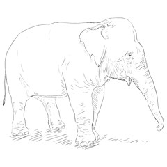 Vector Single Sketch Elephant