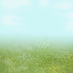 flower field under a light blue sky background