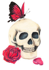 Skull, red rose and red butterfly. Gothic Illustration drawn with colored pencils on white background