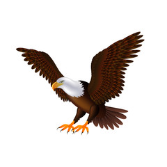 Flying eagle isolated on white vector