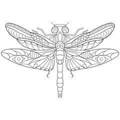 Zentangle stylized cartoon dragonfly insect, isolated on white background. Sketch for adult antistress coloring page. Hand drawn doodle, zentangle, floral design elements for coloring book.