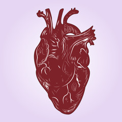 Human heart. Vector illustration. Drawing hands