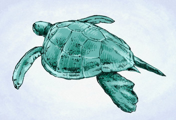 engrave ink draw turtle illustration