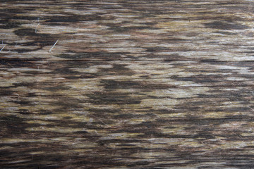 Fallen Tree Wood Grain Texture Horizontal Under The Bark