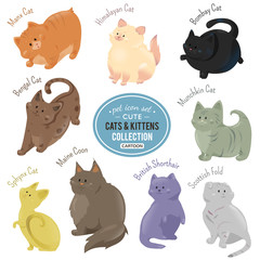 Cute cats and kittens depicting different fur color and breeds