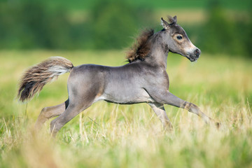 Small horse galloping on green background