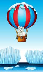 Polar bear riding in the balloon