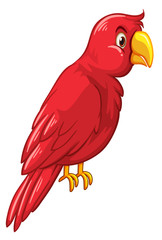 Red bird on white background