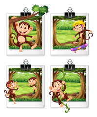 Four frames of monkey in the jungle