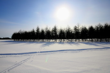 winter landscape with snow covered moere park in sapporo .hokkaido-japan