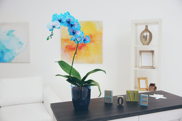 Beautiful blue orchid flower on table in the white room