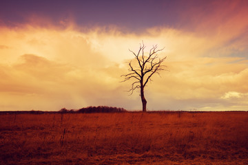 Alone tree on the field at sunrise