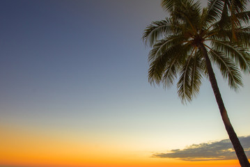 Palm tree against blue and orange sky at golden hour sunset