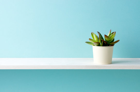 青い背景と棚と多肉植物