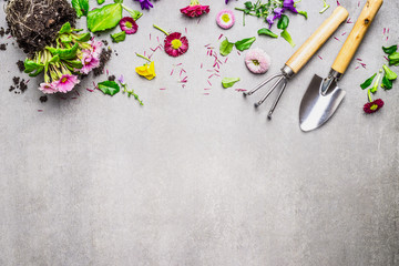 Gardening border with various flowers plant and garden tools on gray stone background, top view, place for text