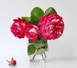 Bouquet of red roses in a vase. Romantic floral still life with roses.