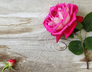 Decorative floral frame or border with pink rose on a wooden plank. Pink rose and bud on wooden background. Photo above.
