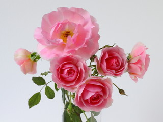 Bouquet of pink roses on a white background.